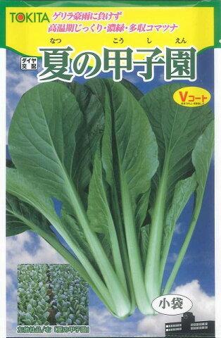 小松菜夏の甲子園 10mlトキタ種苗