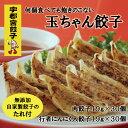 【送料無料】 餃子 60個入 宇都宮餃子「玉ちゃん餃子」2種セット 8...