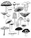 ELOISE RENOUF | MUSHROOMS | A4 アートプ...