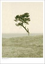 DANISAACWALLIN|HAVANG|フォトグラフィ/ポスター(50x70cm)