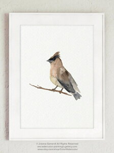 COLOR WATERCOLOR | Cedar Waxwing Mixed Colors Bird | A3 アートプリント/ポスター【北欧 シンプル おしゃれ】