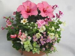 元気に咲くお花たちの寄せ植え 『夏』