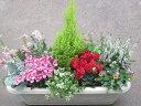 季節のお花たちの寄せ植え『冬』 長方形プランター  【本州のみ送料無料】   【本州のみ送料無料】 【北海道、四国、九州は別途300円】