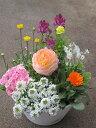 7月1日以降のお届けとなります。季節の寄せ植え【花期:秋まで