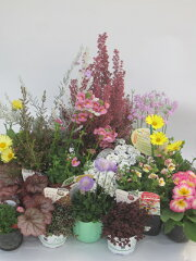 四季を彩る可愛く素敵な花苗たち季節の花苗  デラックスセット  【送料無料】