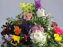 四季を彩る可愛く素敵な花苗たち季節の花苗24個セット  【送料無料】