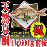 お食い初め鯛セット(祝い鯛600g料理歯固め石プレゼント)