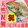 祝い鯛山形県産天然真鯛1尾300g前後冷蔵