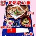 お食い初め 鯛 はまぐり 歯固め石 セット 300g 敷紙 鯛飾り 祝い箸 天然真鯛 焼き鯛 お祝い 料理 蛤 祝鯛 冷