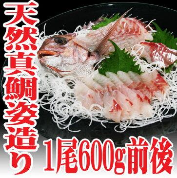 豪華 山形県産 天然真鯛 姿造り600g前後 刺身 盛り合わせ セット 生食用 マダイ