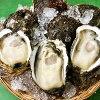 山形県庄内浜天然岩牡蠣岩ガキ生食用大サイズ10個
