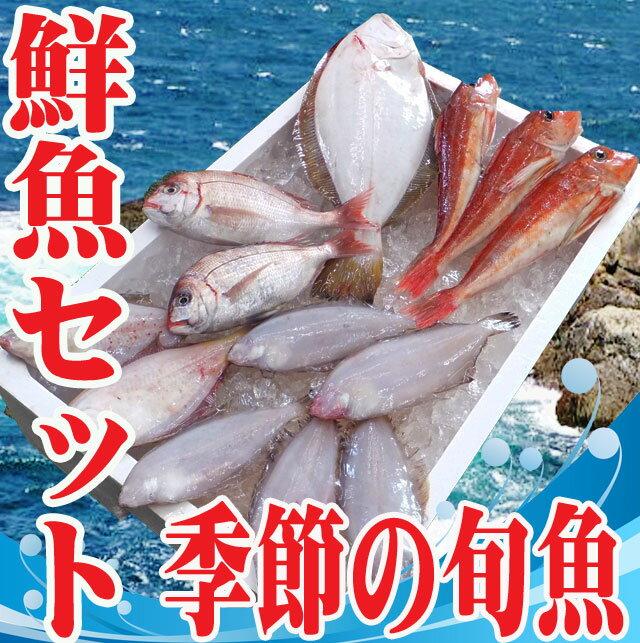 おまかせ 鮮魚セット 山形県庄内浜産 下処理無料 天然真鯛や甘鯛、メバルなど旬の鮮魚 【_のし】【】