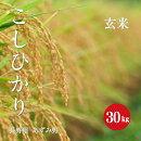 長野県安曇野産こしひかり1等米玄米30kg