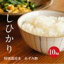 特別栽培米安曇野産コシヒカリ1等米5kg×2