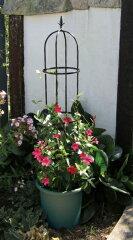 バラやつる性の植物に 第一ビニール スモールオベリスク 120cm P25Apr15
