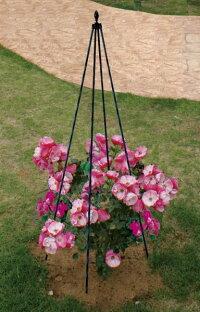バラやつる性植物にトピアリースティック150cm