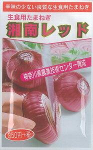 【メール便対応可能】野菜種 タマネギ 湘南レッド 6ml P27Mar15