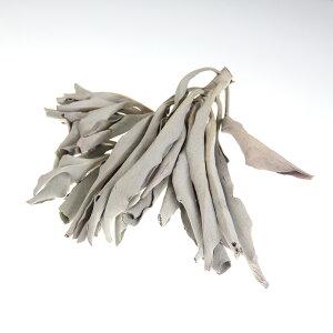 ホワイトセージ 450g カリフォルニア 産 野生種 浄化用 ホワイトセイジ セージ ほわいとせーじ パワーストーン 水晶 の 浄化 に