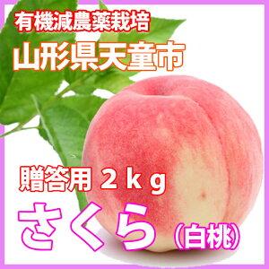 桃 もも 送料無料 【 白桃 さ...