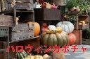 ハロウィン かぼちゃ カボチャ 生かぼちゃ ルージュヴィデタンプ 大 1個 おばけかぼちゃ 特大 飾り 巨大 置物 装飾 オブジェ パンプキン オーナメント 玄関 オブジェ 花ギフト ポイント消化 100円 300円 500円 2