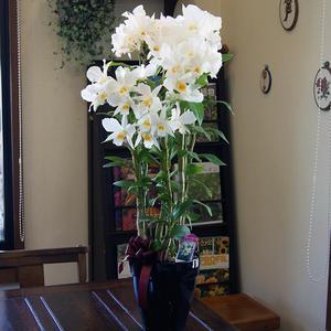 フォーミーデブルの鉢植えギフト