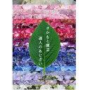 群馬の鉢花 カオプストア さかもと園芸 あじさいとシクラメンのカタログ 育て方