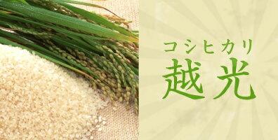 【送料無料・精米無料】令和3年産新潟県産こしひかり玄米30kg