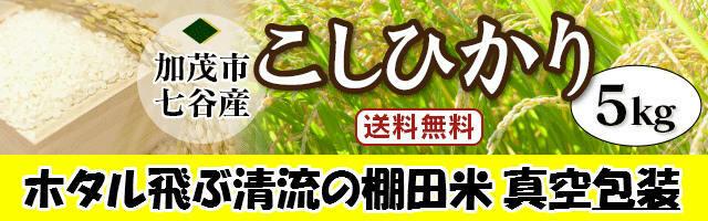 新潟県加茂市七谷地区棚田米こしひかり白米5kg令和3年新米予約