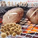 国産原木芽どんこしいたけ(椎茸) 1kg