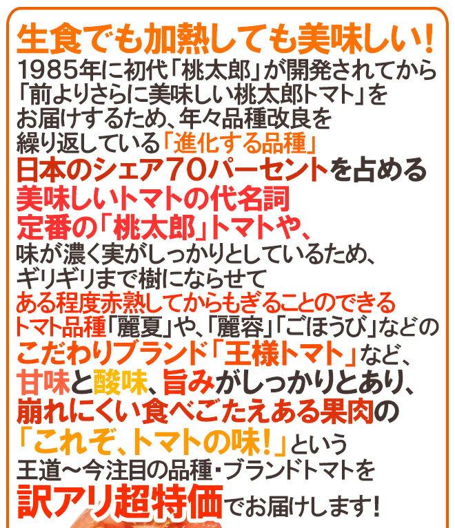 """【送料無料】訳あり""""桃太郎トマトor王様トマト""""約4kg大きさおまかせ産地厳選"""