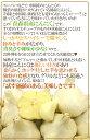 """青森県 """"国産にんにく"""" 約3kg 等級A/B 2Lサイズ以上 送料無料 3"""