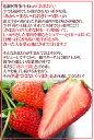 """福岡産 博多 """"あまおういちご"""" 等級G(グランデ) 1箱 2パック入り(1パック約270g)【予約 12月〜4月】 送料無料 3"""
