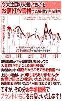"""福岡産博多""""あまおういちご""""等級G(グランデ)1箱2パック入り(1パック約270g)"""