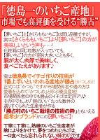 """徳島県勝占産""""夢いちご""""大粒16〜24粒化粧箱入り"""