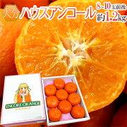 ハウスアンコールオレンジ
