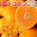 """【送料無料】熊本産 """"デコポン"""" 秀・優品 7〜12玉 約2..."""