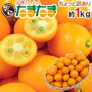 """完熟金柑と言えばこれ!宮崎県 ちょっと訳あり """"完熟きんかん たまたま"""" 約1kg 大きさおまか..."""
