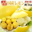 """【送料無料】""""完熟国産レモン"""" 訳あり 約1kg 大きさおまかせ 産地厳選"""