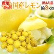 """【送料無料】""""完熟国産レモン"""" 訳あり 約3kg 大きさおまかせ 産地厳選"""