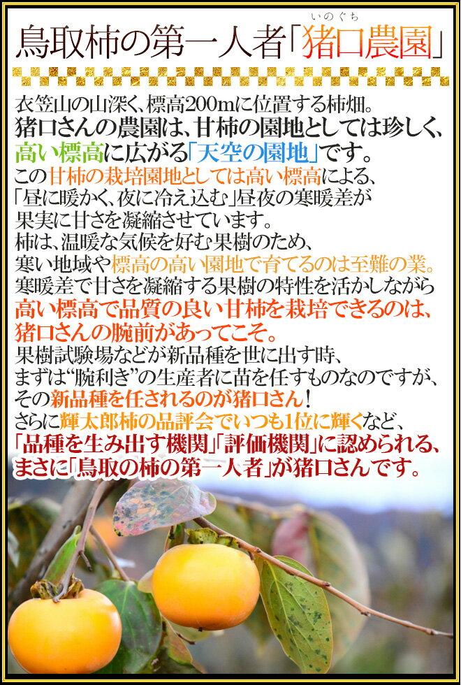 """【送料無料】鳥取県猪口農園""""輝太郎柿""""訳あり8〜12玉前後約3kg【予約10月下旬以降】"""