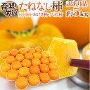 """【送料無料】""""たねなし柿"""" 訳あり 約5kg 大きさおまかせ..."""