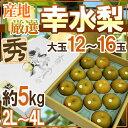 日本で最も愛される赤梨の定番品種♪【スーパーSALE期間中ポイント10倍!】【送料無料】【予約...