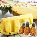 """""""甘熟台湾パイン"""" 3〜4玉 約4.5〜5kg パイナップル"""
