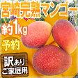 """訳あり """"宮崎完熟マンゴー"""" 2個〜4個 約1kg♪ 3kg以上ご購入で送料無料!【予約 5月下旬〜8月】"""