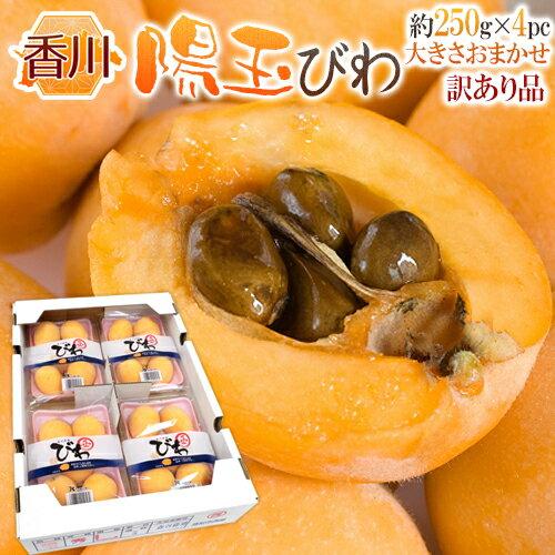 フルーツ・果物, びわ  250g4pc1kg 5