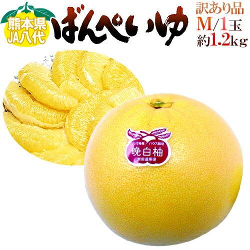 """熊本県八代特産 """"晩白柚"""" Mサイズ 1玉 約1.2kg前後 ちょっと訳あり"""