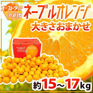 """【送料無料】""""ネーブルオレンジ"""" 約17kg 大きさおまかせ オーストラリア産【予約 7月以降】"""