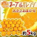 """【送料無料】""""ネーブルオレンジ"""" 約5kg 大きさおまかせ"""