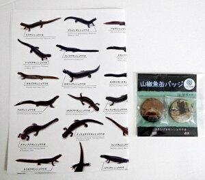 『日本産イモリ・山椒魚 ポスター&チクシブチサンショウウオ 缶バッチ』魚部