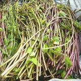 きのめ 山菜 木の芽 あけびの芽 山菜 アケビの芽 木の芽 きのめ(アケビの新芽)朝取り天然物 あけびのめ 130g前後 着日指定不可